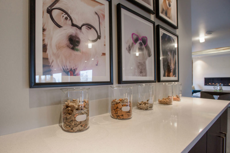 Dog bar with large pictures of dogs wearing glasses, jars of dog treats in multifamily clubhouse in Denver, Colorado.